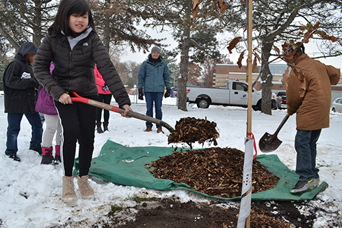 King students shovel mulch on the Shingle Oak tree planted next to the school in King Park as part of the Paper2Tree project.